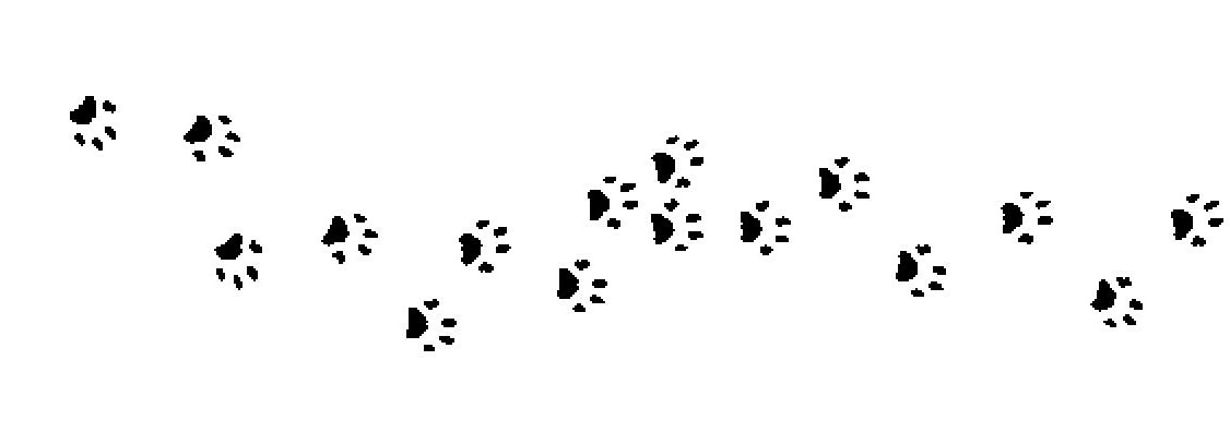 Cat And Dog Prints